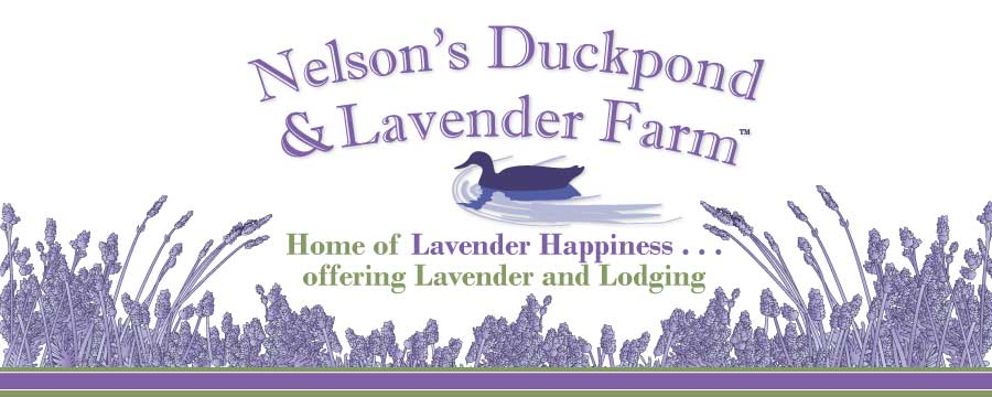 Nelsons' Duck Pond and Lavender Farm